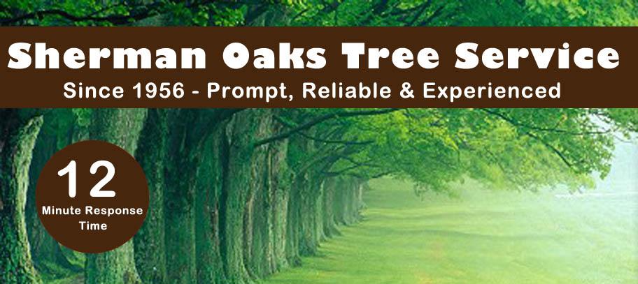 Sherman Oaks Tree Service, Tree Trimming Van Nuys, Burbank Landscape